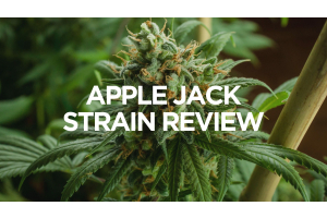 apple-jack-strain-review