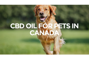 CBD Oil for Pets in the USA