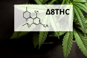Delta 8 THC: A Stirring Experience Without Psychotropic Effects