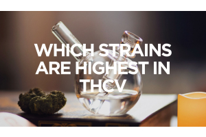 Which Strains Are Highest in THCV?