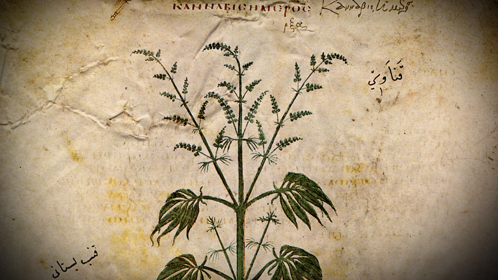 The History of Hemp, Part 1: 12,000 BCE-1553 CE