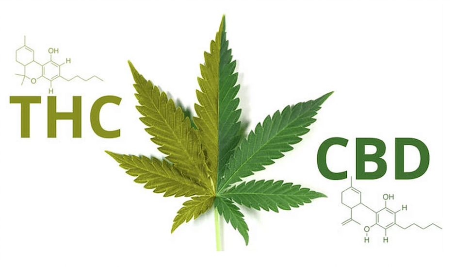 What's the Difference between THC and CBD