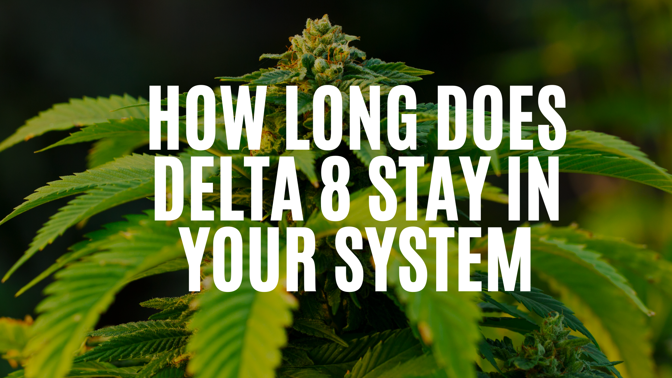 How Long Does Delta 8 Stay In Your System?